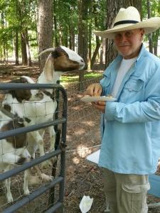 Jack feeding goats
